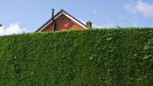 Defensive gardening tips with Locksmith Sheffield